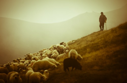Be the Shepherd, not the Sheep